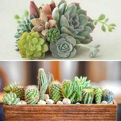 Indoor Houseplant Mix, 6 Succulents & 6 Cacti Planting Succulents, Potted Plants, Cactus Plants, Indoor Plants, Cacti, Indoor Cactus Garden, Garden Plants, Cactus Pot, Plastic Pots