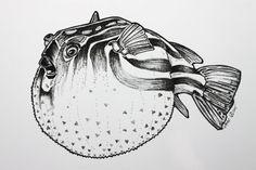 Blowfish Fugu Art Print A4 ou A5 encre dessin par diedododa sur Etsy