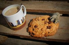 Dis is mine #cat #funny #cookie