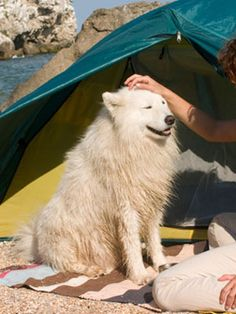 Get some #tips on how to #care for your #dog during the #summer months. #pets #health