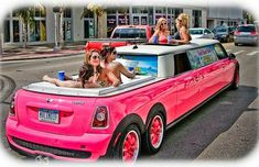 PInk mini cooper stretch limo with jacuzzi in back. Talk about going to Relay in style! Bugatti, Lamborghini, Ferrari, Limo Party, Party Bus Rental, Pink Mini Coopers, Rolls Royce, Hummer Limo, Audi