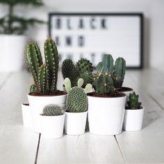Je suis toujours dans l'optique de végétaliser mon intérieur. Ma nouvelle lubie : les cactus ! Je rêve de ces jolies plantes pour mon salon !