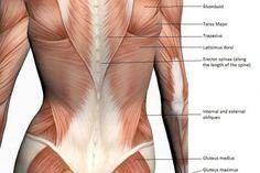 Ejercicios para la parte alta y baja de la espalda para las mujeres | Muy Fitness