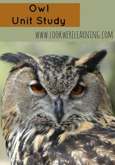 Learn about owls with this fun and free owl unit study for homeschoolers!