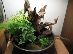 Garden Terrarium, Bonsai Garden, Garden Pots, Indoor Water Garden, Indoor Plants, Paludarium, Vivarium, Driftwood Planters, Micro Garden