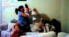 Um cão protege um menino que estava a ser espancado pela sua mãe …