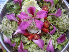Conheça as Flores Comestíveis!