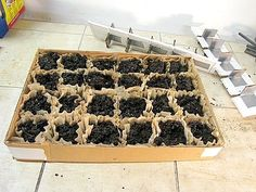 coffee filter seed trays great idea for seeds that dont like to be transplanted ie okra