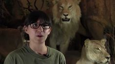 STEM Read visited the Midwest Museum of Natural History in Sycamore, Illinois. We talked to executive director Cindy Chang about cool, meat-eating creatures.