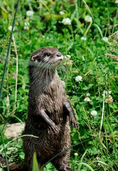 otter stand