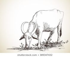 Find Sketch Grazing Buffalo Hand Drawn Illustration stock images in HD and millions of other royalty-free stock photos, illustrations and vectors in the Shutterstock collection. Thousands of new, high-quality pictures added every day. Drawing Poses, Drawing Sketches, Art Drawings, Cow Illustration, Illustrations, Art Painting Gallery, Figure Sketching, Cow Painting, Cow Art