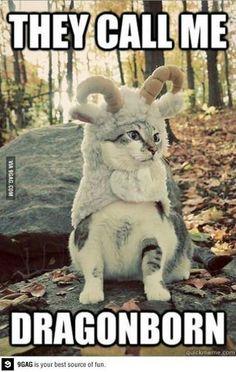 Tom Cat Foolery