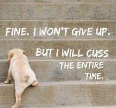 New Funny Dogs With Captions Make Me Laugh Hilarious Humor Ideas Great Quotes, Quotes To Live By, Me Quotes, Funny Quotes, Inspirational Quotes, Qoutes, Style Quotes, Fun Motivational Quotes, Motivational Affirmations