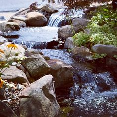Can't get enough water feature photos? Atlantic Water Gardens is on Instagram! @atlanticwatergardens - Make sure you follow for great water feature photos daily!