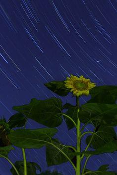 The Sun following the Stars