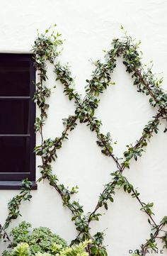 Nice idea for a garden wall, especially if it bloomed.
