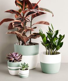 Medium Seafoam Pot - Ansel & Ivy modern mint green / seafoam and white planters for indoor plants Informations About Medi - Painted Plant Pots, Painted Flower Pots, Decorated Flower Pots, House Plants Decor, Plant Decor, Indoor Plant Pots, Indoor Flower Pots, Indoor Cactus, Indoor Ivy