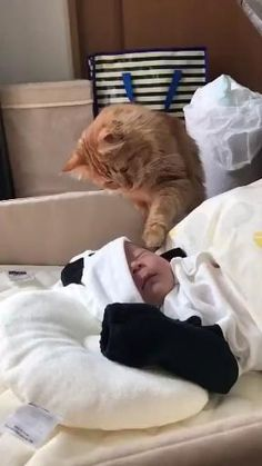 Cute Cats And Kittens, I Love Cats, Crazy Cats, Kittens Cutest, Cute Little Animals, Cute Funny Animals, Funny Cats, Gato Gif, Cute Animal Videos