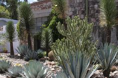 So many courtyards with varying vegetation, San Miguel de Allende
