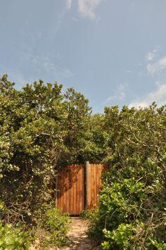 Gate Hibiscus, Gate, Beach House, Plants, Beach Homes, Portal, Planters, Plant, Beach Houses