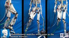 Esqueleto movido por músculos artificiales [VÍDEO]