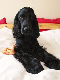 My little dogy: Bonnie