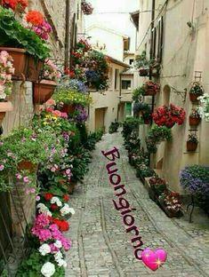 Buon giorno Good Morning Greetings, Good Morning Good Night, Italian Greetings, Valentine Decorations, Facebook, Flowers, Plants, Genere, Sardinia