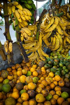 Farmers' Market, San Ignacio, Belize.