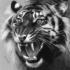 Tatoo Tiger, Tiger Tattoo Design, Cat Tattoo, Beautiful Cats, Animals Beautiful, Animal Drawings, Pencil Drawings, Osiris Tattoo, Tiger Sketch