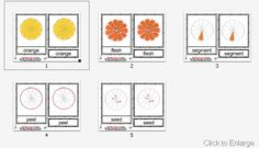 Montessori-Inspired Fruit Unit with links to lots of printables and activities (image from Montessori Helper)