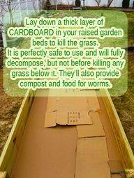 diy container gardening ideas | Cardboard boxes for Raised #Garden Beds #tips #gardening #grass