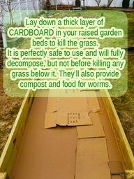 diy container gardening ideas | Cardboard boxes for Raised #Garden Beds #tips #gardening #grass