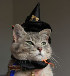 Forget the witch, beware if the cat!