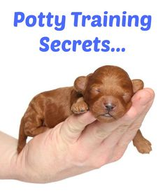 Secret # 7 works awesome and can be read about in Chapter 6 from our free Puppy Housebreaking Made Easy e-book…