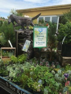 Matlock Garden Centre - Blue Diamond - Garden Centre - Lifestyle - Layout - Landscape - Visual Merchandising - www.clearretailgroup.eu