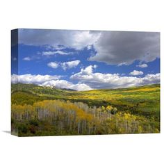 Global Gallery Nature Photographs Gunnison National Forest in Fall, Colorado by Tim Fitzharris Photographic Print on Wrapped Canvas Size: