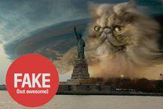 distinguishing between real and fake photos of hurricane Sandy. catstatue.jpg