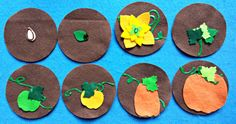 PUMPKINS PLANT Life CYCLE Growing and Changing Flannel Board Felt Board Story Set