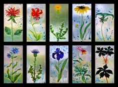 """New England Wildflowers, fused glass, 5""""X12"""" each, $1000 (price for set of ten).  From left to right - Bee Balm, Tiger Lily, Dandelion, Black Eyed Susan, Nodding Trillium, Chickory, Purple Flag Iris, Thistle, Pink Columbine, Mandrake"""