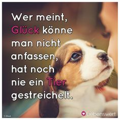 Sayings for animal lovers - They are so very chuchi and so …. must smile again! They are so very chuchi and so …. must smil - Cute Baby Animals, Animals And Pets, Health And Fitness Articles, Sherlock Quotes, True Words, Animal Drawings, Animal Photography, Animals Beautiful, Dog Love
