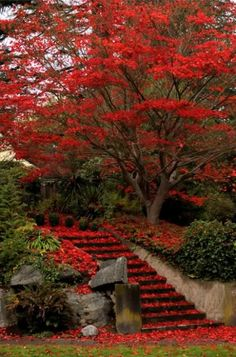˚Red Autumn Red Leaves, Fall Leaves, Red Tree, Stairways, Park Landscape, Autumn Park, Red Pictures, Stone Steps, Autumnal