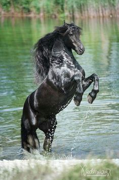 Great shot of a horse rearing up in the water! Spectacular!