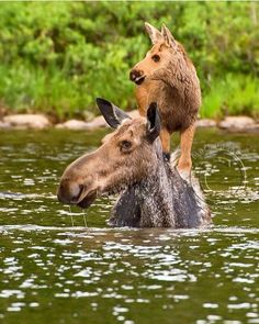 A Mamas love ❤️ - animals so cute - Animals Wild Amor Animal, Mundo Animal, Nature Animals, Animals And Pets, Beautiful Creatures, Animals Beautiful, Cute Baby Animals, Funny Animals, Animal Babies