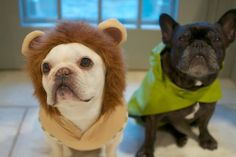 F&S participated in #NationalDressUpYourPetDay. Read more about their adventures on the #DailyWag.