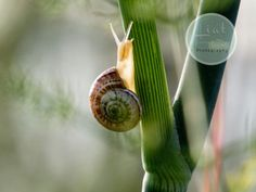 Morning Snail by LiatYavnehRipp on Etsy