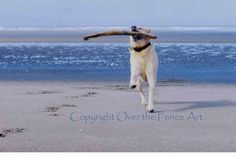 Dog Photography Yellow Labrador Runs on Beach by overthefenceart