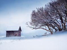 Winter's Hedge