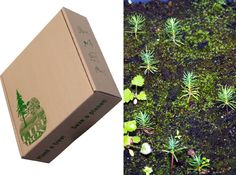 Paul Stamets' Life Box is a brilliant seed-sprouting cardboard box!