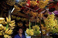 Banaanit kasvavat ruohovartisissa kasveissa. Tässä banaaneja myydään Jakartassa…