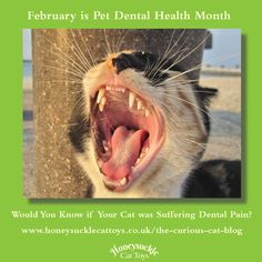 How do we know when our cats are experiencing dental pain? February is Pet Dental Health and an opportunity to learn how to spot the signs of a disease which can leave our cats suffering in silence. 😿 Please read my latest blog post to learn more. Cat Magazine, Suffering In Silence, Dental Health, Cat Toys, Cool Cats, Opportunity, February, Signs, Pets